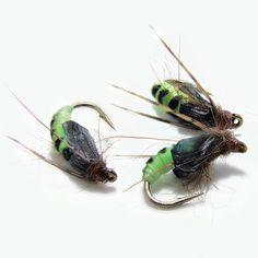 Green Rock Worm Caddis Pupa - Rhyacophilidae