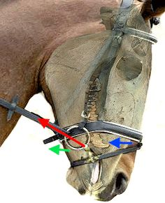 The Bridle & the Bit How Headstalls and Bits Fit and Work