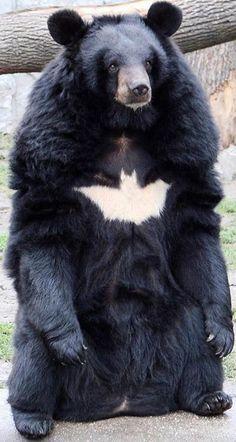 Nananana nananana - Batbear!