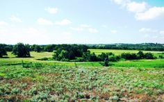 AGRICULTURAL / EQUINE / RECREATIONAL LAND FOR SALE in Manor, Travis County, Texas. 244 acres of fertile soils and mixed grasses, with large trees by the creek that wraps around 3 sides of the property.