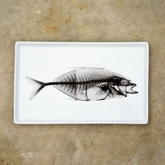 Fish X-Ray Tray Large now featured on Fab.