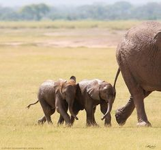 Mom and babies. I love elephants so much. <3