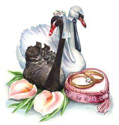 Wedding Card Design, Wedding Art, Wedding Album, Wedding Images, Wedding Pictures, Wedding Illustration, Illustration Art, Swan Painting, Wedding Shower Cards