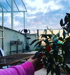 #my #artstudio #terrace #garden #freshair #tree  #painting #@gulayalpayart #artist #ocean #ritual  #instaphoto #art #gallery #photoart #modernart #instaart  #artist  #artblogger #natureart #oceanside #painting #natureartmuseum  #artofvisuals #positivevibes #positiveenergy #love  #artmagazine  #green  #collector #contemporaryart by gulayalpayart