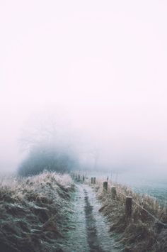moody-nature:  Misty path   By Henrik Hansen