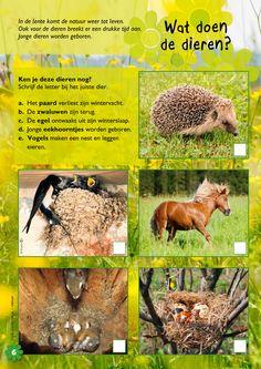 Wat doen dieren in de lente? Karen - New Ideas Science For Kids, Kids Gifts, Crafts For Kids, Karen, Fauna, Montessori, Jr, Spring, Crowns