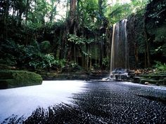 A waterfall breaks the stillness in a lush pocket of Suriname rain forest.
