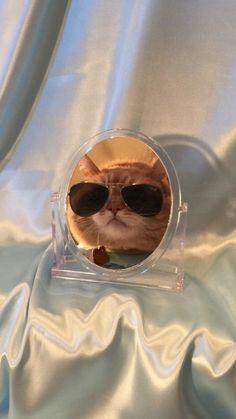 Cat Profile, Funny Animals, Cute Animals, Fancy Cats, Super Cat, Cat Aesthetic, Cat Wallpaper, Cat Drawing, Cat Breeds