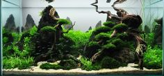 Aquascaping categories--my own take on it. | Page 2 | AquaScaping World Forum
