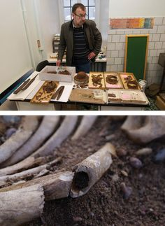 Jüri Peets (top), the archaeologist who uncovered Salme 2, stands in the lab at the University of Tallinn with some of the artifacts recovered from the ship. An arm bone (above) shows evidence of having been sliced by a sharp weapon in combat.