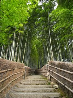 Home »     Bridges , Japan , Nature »     The Bamboo Forest Trail near Kyoto, Japan  Windows 8 UI > Desgined By. Renadel Dapize The Bam...