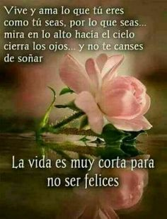 Good Morning In Spanish, Good Morning Good Night, Morning Wish, Morning Love Quotes, Morning Greetings Quotes, Morning Images, Good Day Wishes, Happy Birthday Minions, Beautiful Rose Flowers