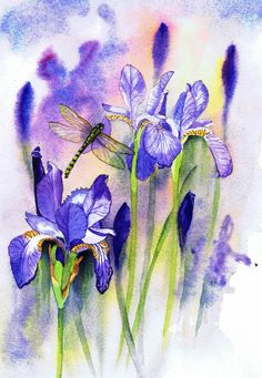 Dragonfly Irises watercolour painting by Julie Horner