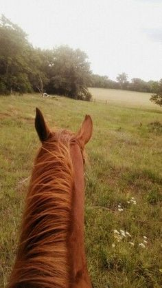 Horseback rider's view of a chestnut with fields and bordering woods ahead