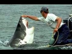 The owner of Sharkdiving Unlimited (Mike Rutzen) in Gansbaai, near Cape town South Africa, is passionate about the conservation of the Great White shark Stupid Pictures, Shark Pictures, Funny Photos Of People, Funny Pictures, Funny Pics, Fail Pictures, Funny People, Funny Videos, Viral Videos
