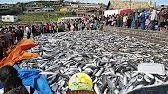 PESCA ARTESANAL - TOP FISHERY - GAROPABA - SANTA CATARINA - BRASIL - YouTube