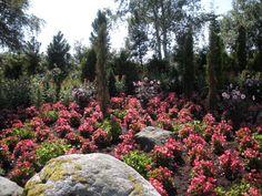 Stunning gardens Sol Hidle