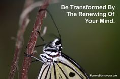 be transformed by the renewing of your mind - Google Search