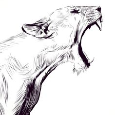 Montag& yawning from Lucky Jackson. Nice, I will not vi .- Montag's Gähnen von Lucky Jackson. Schön, ich werde nicht viel im Fresko sehen oder Montag& yawning from Lucky Jackson. Well, I will not see much in the fresco or … – the - Animal Sketches, Animal Drawings, Pencil Drawings, Art Drawings, Tattoo Drawings, Pen Sketch, Drawing Sketches, Lion Drawing, Drawing Ideas