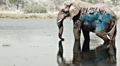 cornbread graffiti elephant 1024x569 Graffiti Art: History, Material, Tags