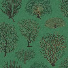 Designer wallpaper online store for usa canada wallpaper inspired by antique botanical prints from the late beautiful species of coral are featured on this enchanting and delightful wallpaper such as staghorn sisterspd