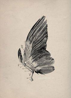 Bird wing study