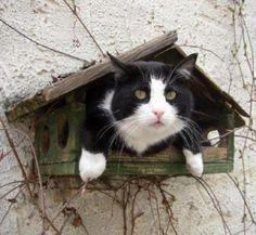 Cat in birdhouse Photo