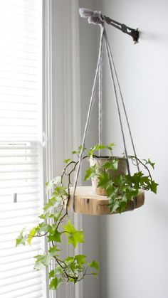 The Top Easy-to-Grow Air Purifying Houseplants —Refreshed Designs Diy Hanging Shelves, Plant Shelves, Hanging Planters, Cool Plants, Air Plants, Indoor Plants, Shade Plants, Potted Plants, House Plants Decor