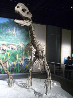 Dilophosaurus sinensis, Hong Kong Science Museum. Dinosauria, Saurischia, Theropoda, Ceratosauria, Dilophosaurus.