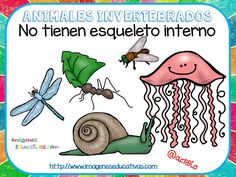 Tipos de animales claseficación (3) Dual Language Classroom, Welcome To The Jungle, Learning Spanish, Science Classroom, Science And Nature, Teaching English, Animal Kingdom, Activities, Fictional Characters