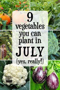 Vegetable Garden Planner, Garden Plants Vegetable, Starting A Vegetable Garden, Planting Vegetables, Growing Vegetables, Beginner Vegetable Garden, Gardening For Beginners, Gardening Tips, Autumn Garden