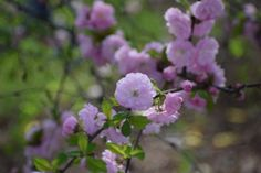 Pink Flowers 🌸 - So I Was Thinking Pink Roses, Pink Flowers, Rose Buds, Photo Galleries, Outdoors, Gallery, Garden, Nature, Plants