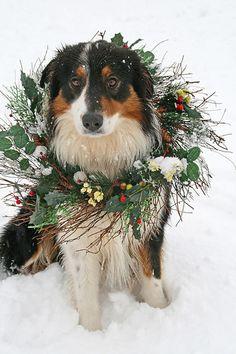 Christmas dog | Flickr - Photo Sharing!
