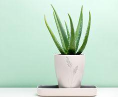 Aloe vera plant on a green background 2 | Dermstore Blog
