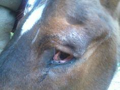 Achtergelaten paard met oogprobleem Cow, Horses, Animals, Animais, Animales, Animaux, Animal, Horse, Dieren