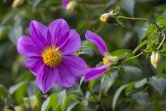 Pretty Purple Flower - Rule of Thirds - David's Class Rule Of Thirds, Purple Flowers, Pretty, Plants, Plant, Planting, Planets