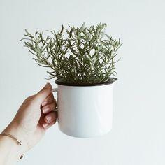 ceramic mug with rosemary plant