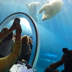 Things to do in Winnipeg - visit the polar bears at assiniboine park zoo. Their home is amazing. Backpacking Canada, Canada Travel, Visit Canada, O Canada, Stuff To Do, Things To Do, Canada Holiday, Banff National Park, Places