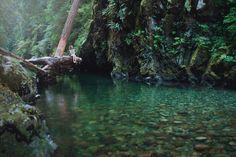 The Quiet Place (by Elizabeth Gadd)