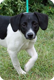 Meet Oreo 18941 A Dog For Adoption Prattville Autauga Humane