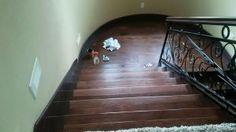 Pro #168092 | Expert Hardwood Flooring | Ontario, CA Hardwood Floors, Flooring, Carpet Installation, Floor Finishes, Ontario, Countertops, Bamboo, Stairs, Home Decor