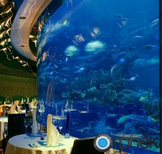 http://orphek.com/burj-al-arab-aquariums/
