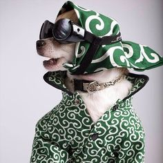 This chihuahua has some serious style. Ugly Animals, Happy Animals, Pet Shop, Dressed Up Dogs, Cute Dog Clothes, Pet Style, Animal Fashion, Dog Fashion, Dog Shaming