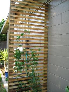 privacy screen/trellis – more modern but it provides lots of privacy in winter while still being trellis-y