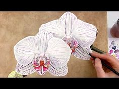 How to paint a realistic stripy patterned orchid in watercolor - Anna Mason Art