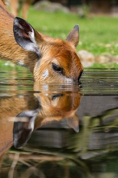 As the deer pants for streams of water, so my soul pants for you, O God ~ Psalm 42:1