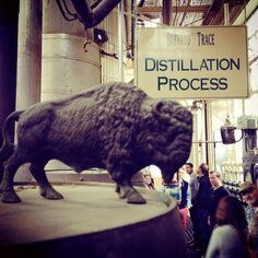 tour our facilities! Buffalo Trace, Distillery, Bourbon, Kentucky, Cow, Tours, Animals, Bourbon Whiskey, Animales