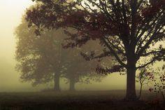 Tre querce nella nebbia di Mindaugas Ma