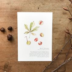 A Natural Year - Horse Chestnut - A5 Print — anniebrougham.com English Gifts, Horse Chestnut, History Books, Natural History, A5, Fine Art Paper, Digital Prints, Place Card Holders, Fine Art Prints