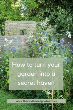 3 top ideas and tips for making your garden more private. How to choose privacy screens and fence ideas for an overlooked backyard. #middlesizedgarden Garden Privacy Screen, Privacy Trees, Easy Garden, Garden Pots, Espalier Fruit Trees, Low Maintenance Garden Design, How To Grow Taller, Deciduous Trees, Garden Trellis